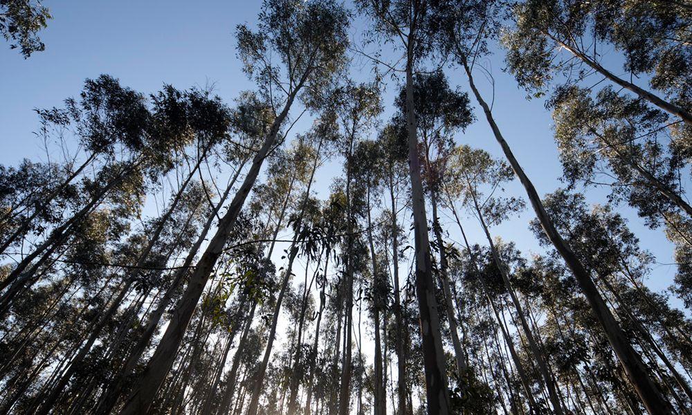 Firmas gallegas promueven un sistema para el seguimiento de la madera