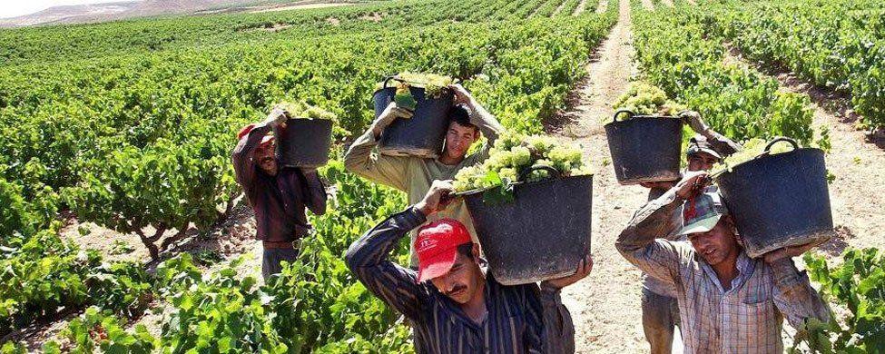 España pierde 7.104 trabajadores extranjeros en julio tras cinco meses de ascensos