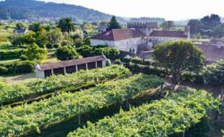 El sector del vino presenta su candidatura a las ayudas europeas