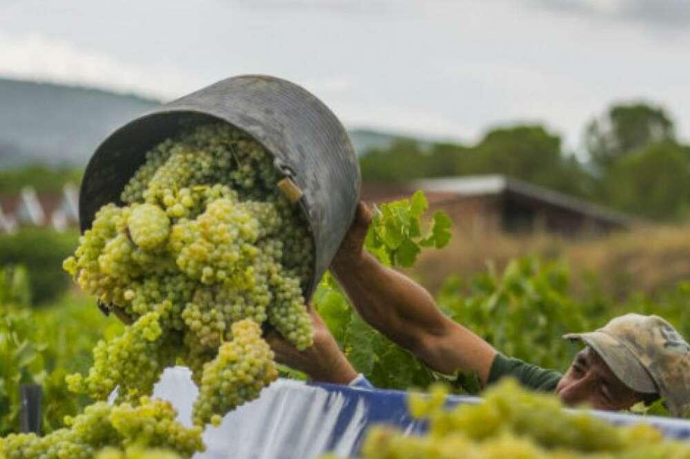 El granizo se llevó por delante 273.000 kilos de uva en O Ribeiro