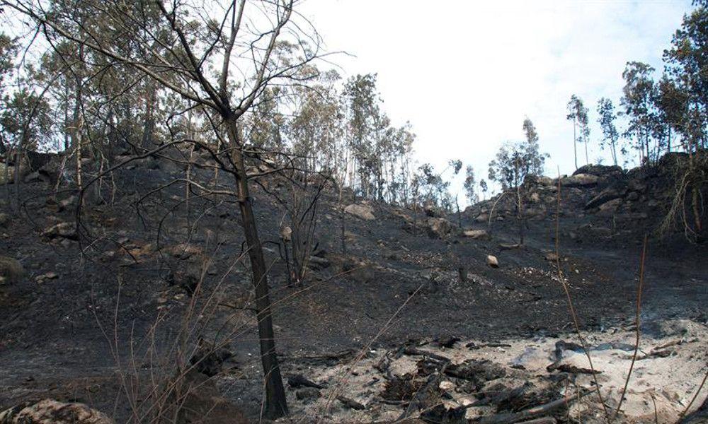 Balance final de los incendios: 49.000 hectáreas calcinadas