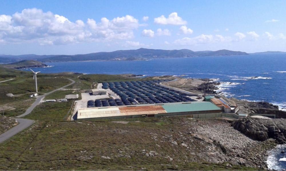 Stolt Sea Farm dispara un 30% las ventas de sus seis plantas gallegas