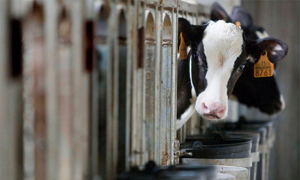 ¿Y si la multa al 'cártel lácteo' la acaban pagando los ganaderos?