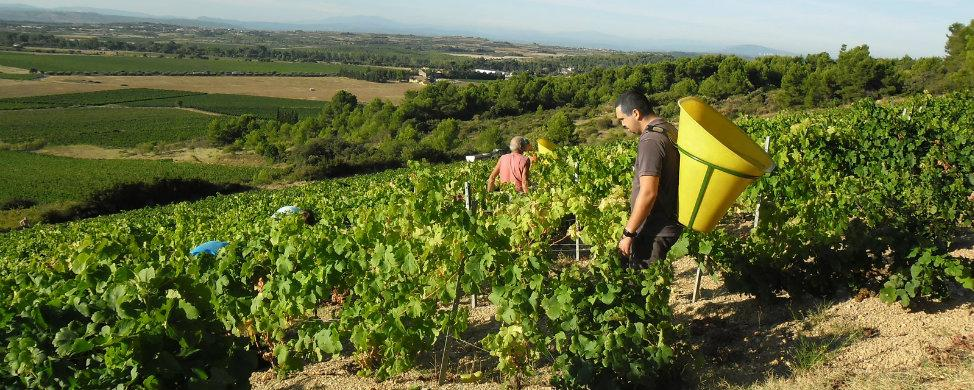 La uva salvará las facturas de otoño a 15.000 españoles