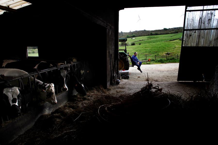 Una explotación láctea en el concello coruñés de San Sadurniño