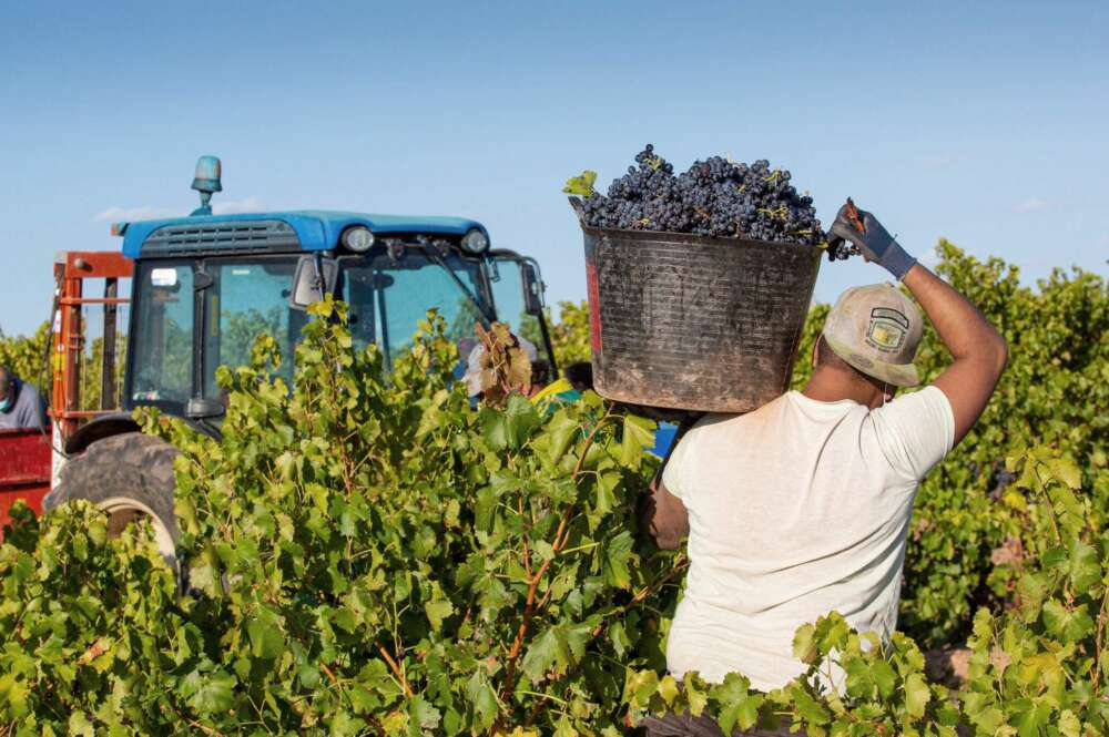 La tormenta de granizo destroza la cosecha de uva de Chantada