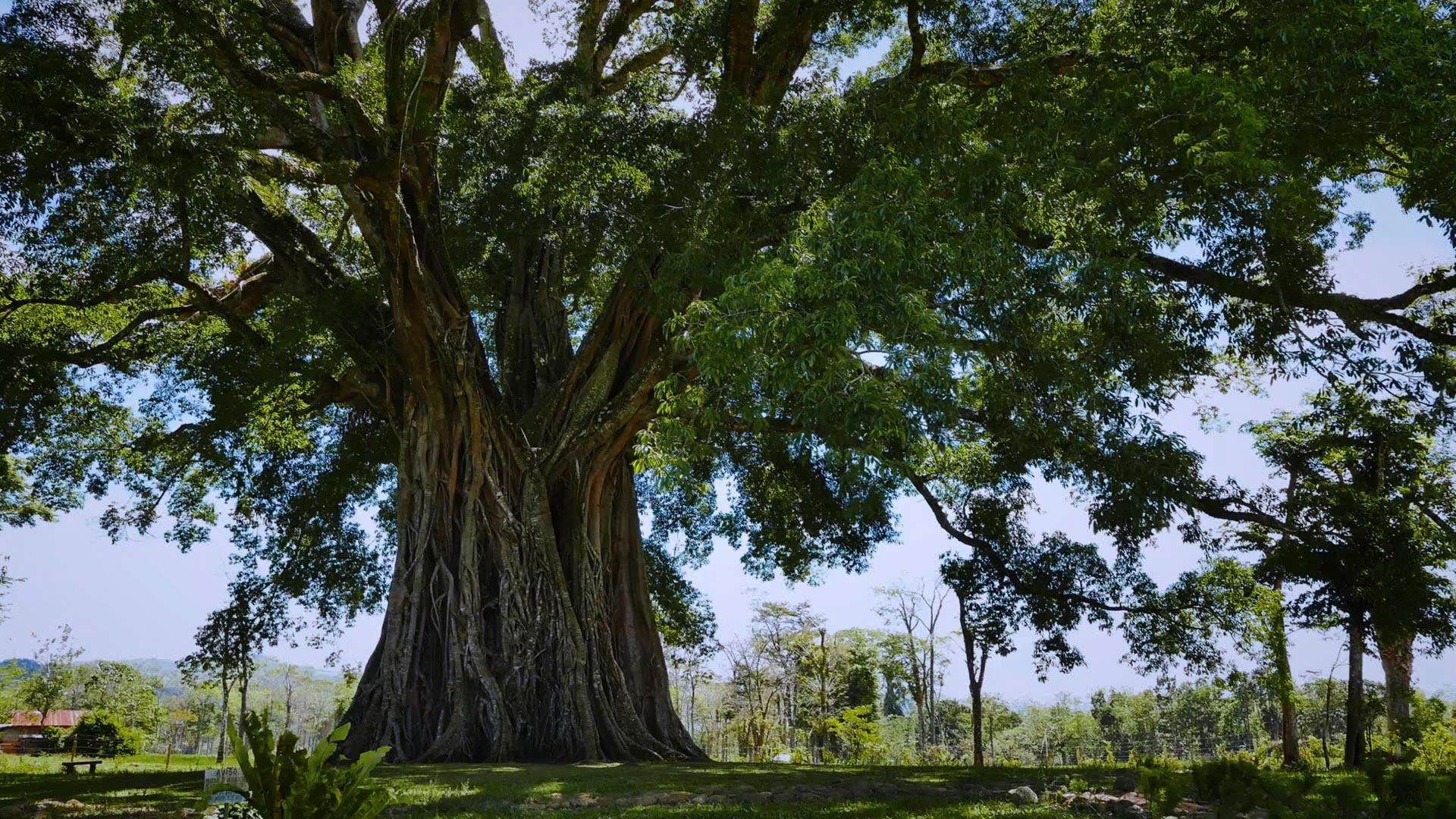 Fotograma de 'La genialidad de los árboles', de Emmanuelle Nobécourt