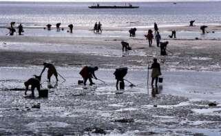 Mariscadoras trabajando. Foto: Xunta de Galicia