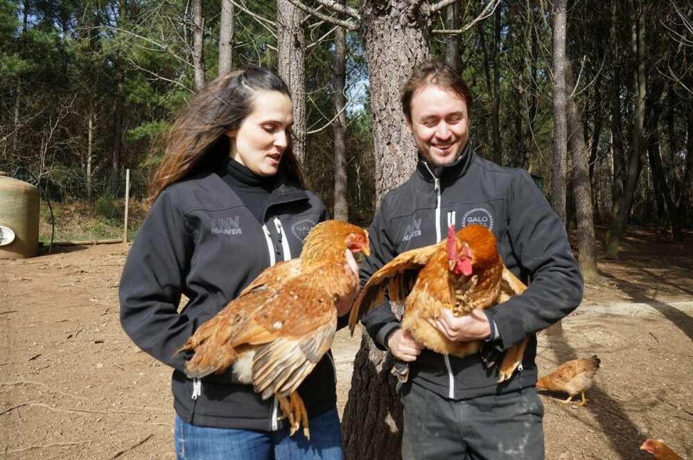 La granja ecológica Galo Celta investiga el uso del bagazo de Estrella Galicia para desarrollar productos avícolas cardiovasculares