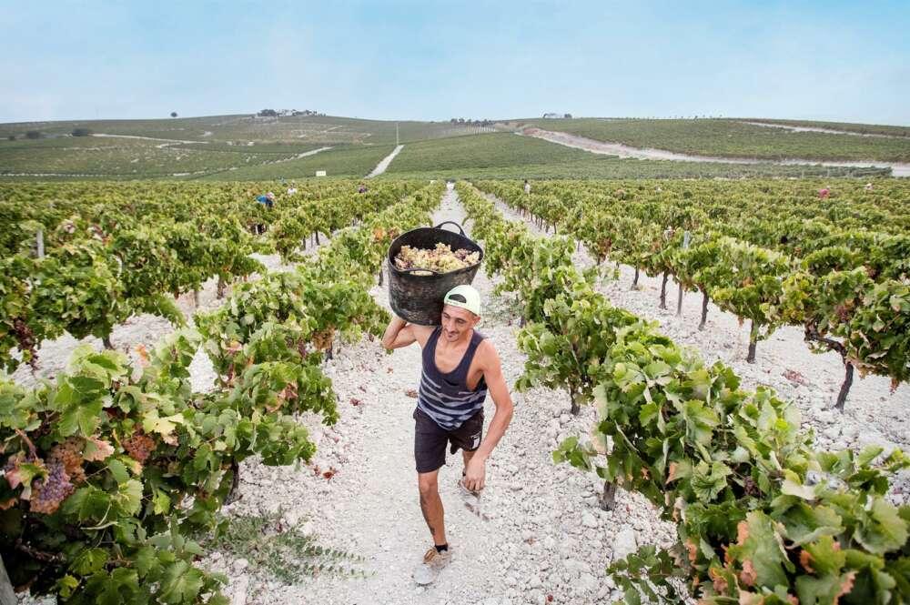 Arranca la campaña de control de las vendimias en los viñedos de denominación de origen