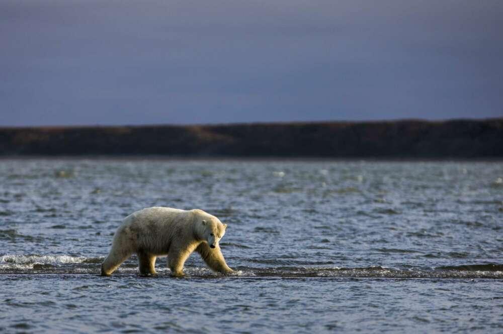 Cambio climático: actuar sin alarmismos