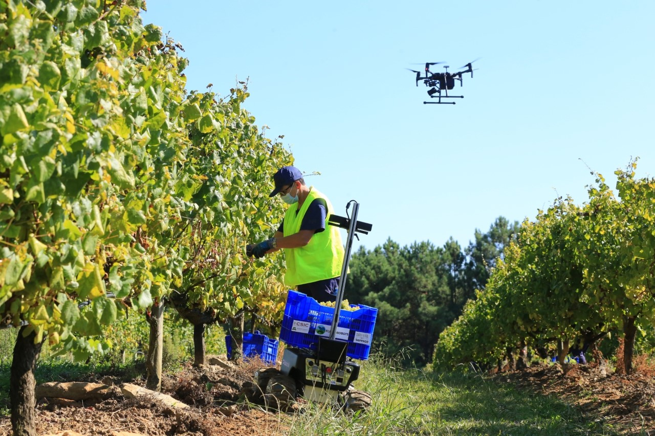 Un dron comprueba los trabajos en el viñedo de O Rosal de Terras Gauda