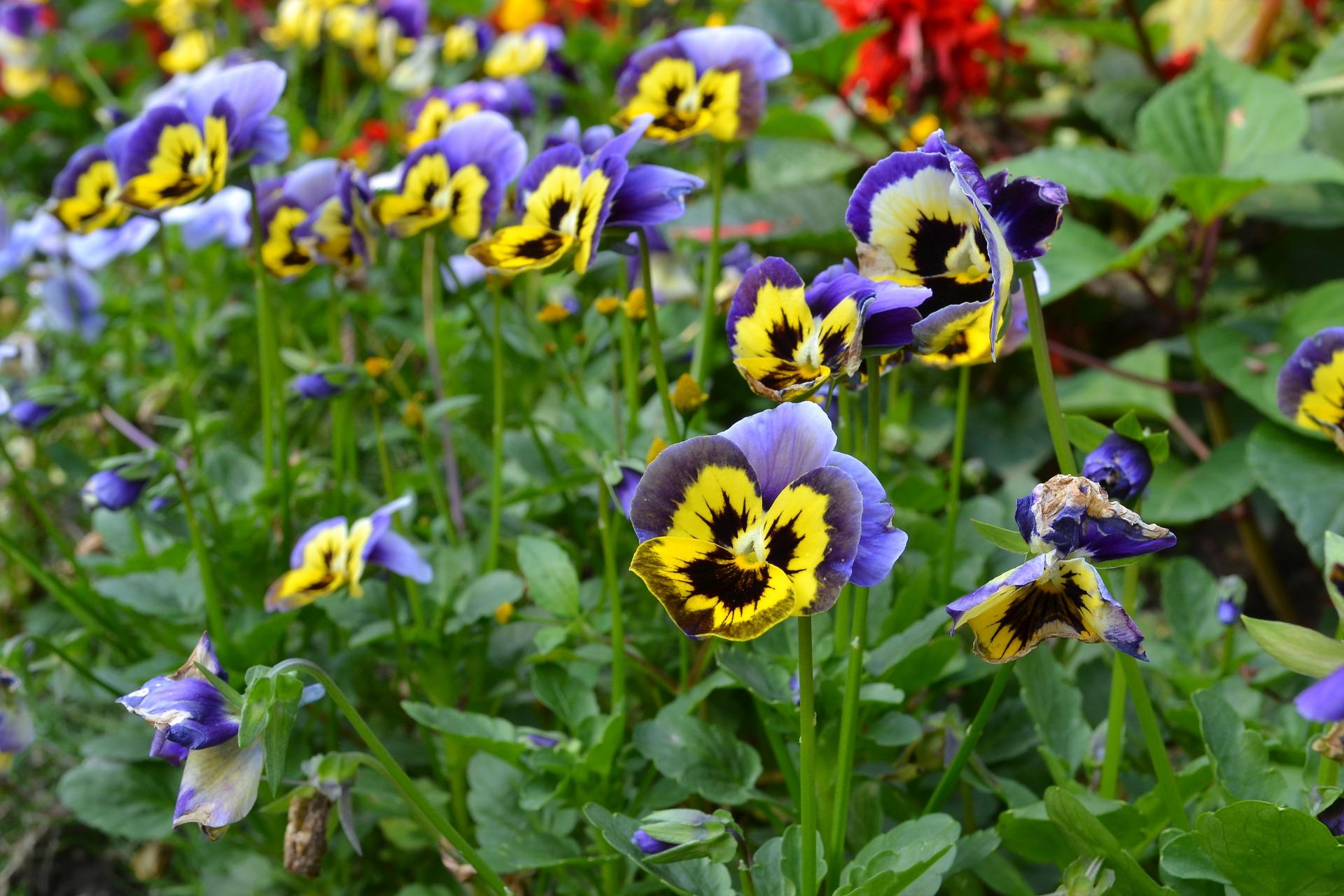 purple yellow flowers 3487865 1920