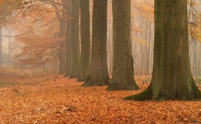 flandes otoño2
