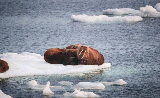Ice Cruising. Silversea.