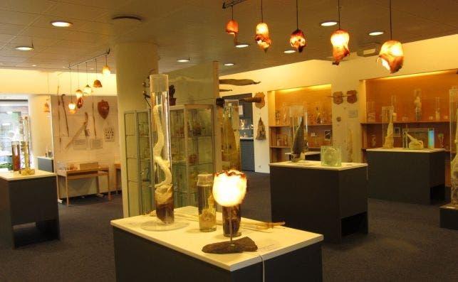 Icelandic Phallological Museum, Reykjavík