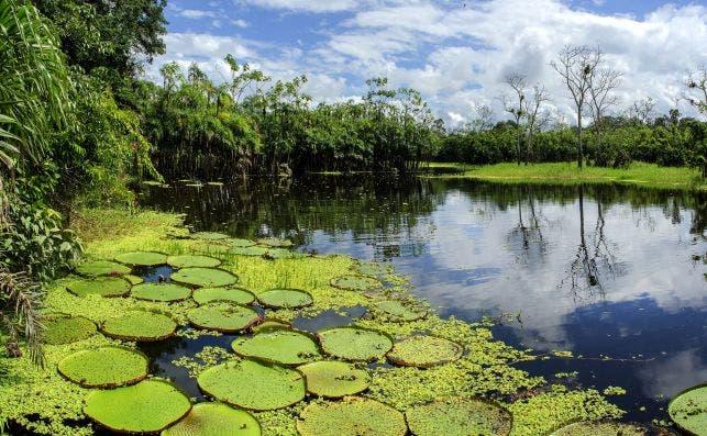 Reserva Pacaya Samiria, Loreto © Jungle Experiences