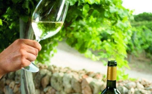 menorca vinos