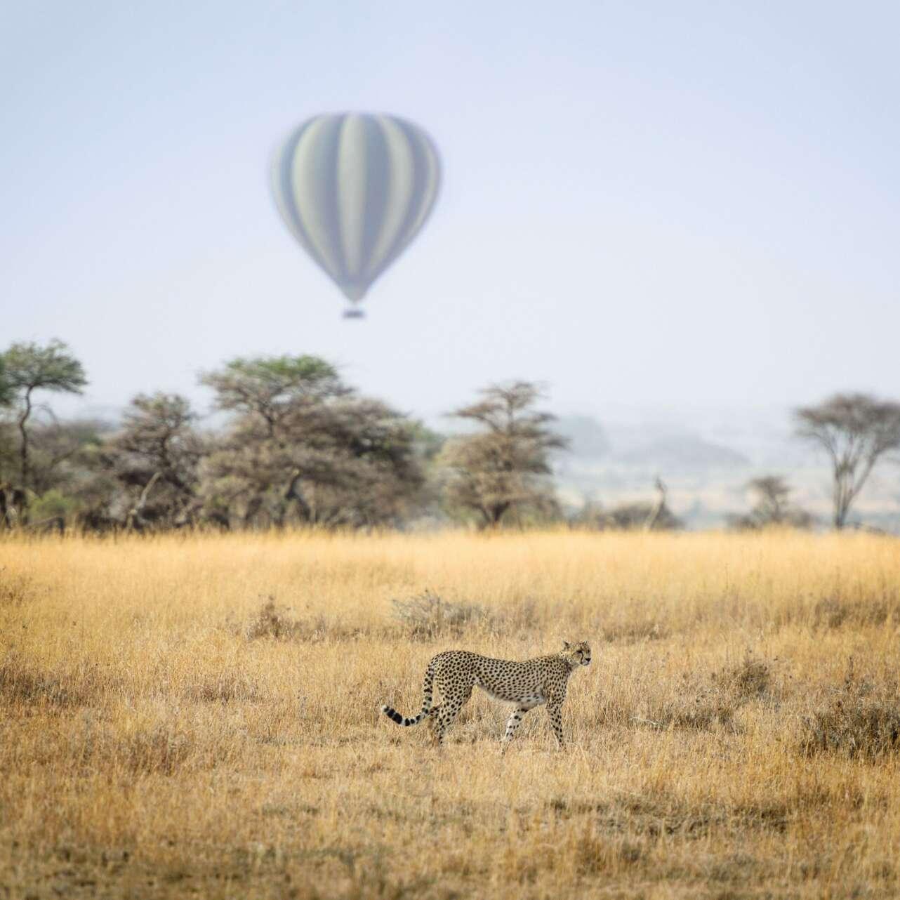 Serengueti. Foto  Hu Chen | Unsplash.