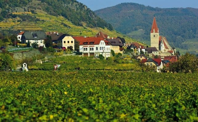 Valle de Wachau viñedos