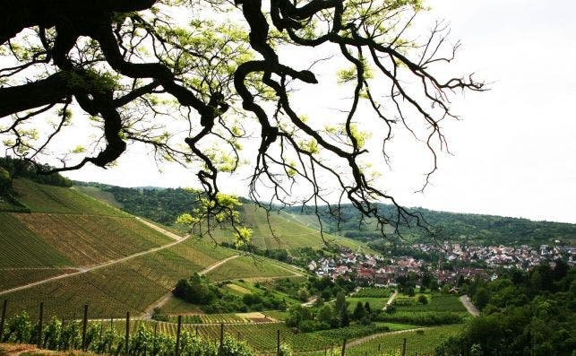 Viñedos de Baden Württemberg. Foto Manena Munar.