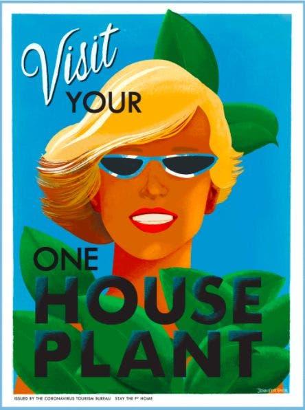 Visityourhouseplant. Imagen Jennifer Baer.
