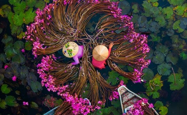 WINNING PHOTO 'Washing water lilies' by @ptkhanhhvnh (Vietnam)
