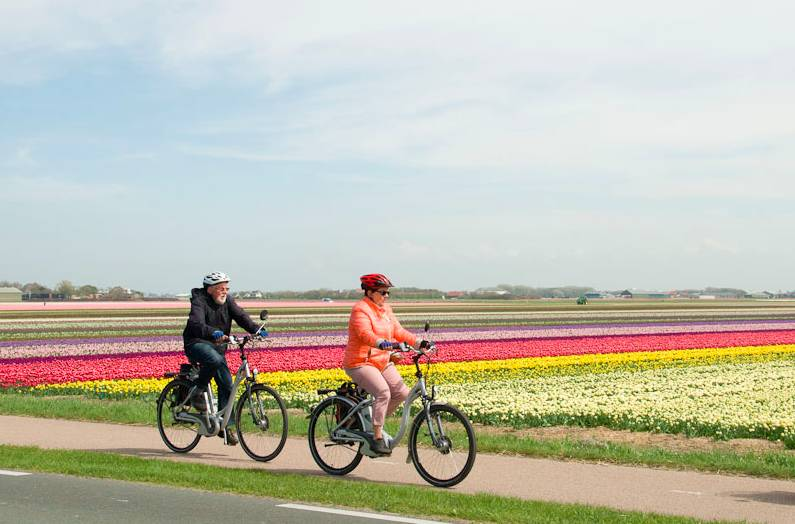 Campos tapizados de tulipanes. Foto Holland Cycling