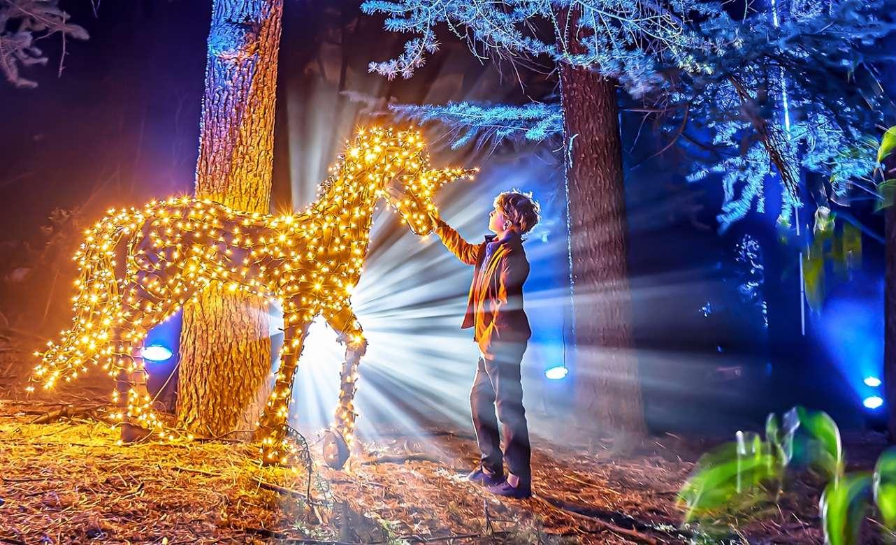 Un millón de luces LED: la magia llega al Jardín Botánico de Madrid