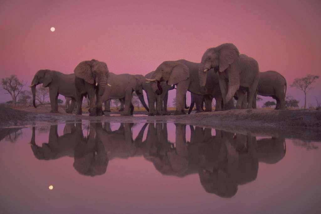 Elefantes en el Parque Nacional de Chobe (Botsuana). Fotógrafo Frans Lanting National Geographic