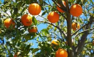 oranges 1117628 1920